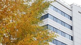 Geschäftszentrum hinter Herbstbäumen stock video