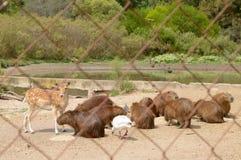 Geschützte Tiere in der natürlichen Reserve, Montevideo Uruguay Stockbild
