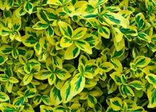 Geschakeerde bladeren Stock Fotografie