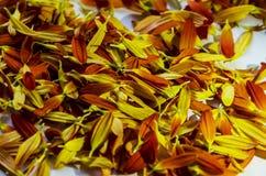 Gescheiden gekleurde bloemblaadjes van bloemen royalty-vrije stock foto's
