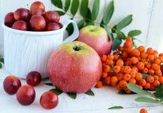 Geschenke des Herbstes: Äpfel, Kirschpflaume, Eberesche auf einem weißen Hintergrund Stillleben in Gelbem, orange, rot Stockbild