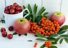 Geschenke des Herbstes: Äpfel, Kirschpflaume, Eberesche auf einem weißen Hintergrund Stillleben in Gelbem, orange, rot Lizenzfreie Stockbilder