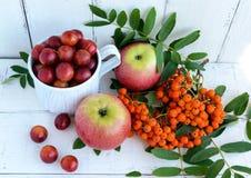 Geschenke des Herbstes: Äpfel, Kirschpflaume, Eberesche auf einem weißen Hintergrund Stillleben in Gelbem, orange, rot Stockfotos