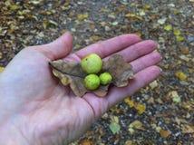 Geschenke des Herbstes Stockbild