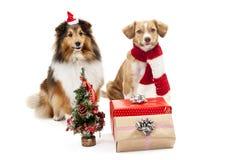 Geschenke und Weihnachtsbaum vor zwei Hunden Stockbilder