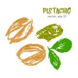 Geschetste illustratie van pistachenoot Stock Afbeelding