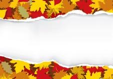 Gescheurd document met de herfstbladeren Stock Foto's