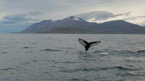 Geschichte des Wals im Fjord stockfotografie