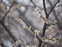 Geschichte im Frühjahr Stockfotografie