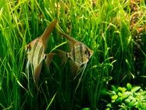 Geschil tussen vissen stock afbeeldingen