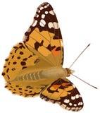 Geschilderd Dame Butterfly Stock Foto's