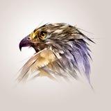 Geschilderd kleurenhoofd van de vogelhavik Royalty-vrije Stock Afbeeldingen