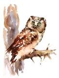 Geschilderd Owl Watercolor Bird Illustration Hand Royalty-vrije Stock Foto