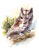 Geschilderd Owl Watercolor Bird Illustration Hand Stock Afbeelding