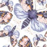 Geschilderd trekkend teddybeer naadloze achtergrond van de waterverf de ruwharige vlinder, heldere kleuring, dik torso, nachtvlin Stock Afbeeldingen