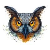 Geschilderd waterverfbeeld van een verhongerde nachtuilvogel op een witte achtergrond Stock Afbeeldingen