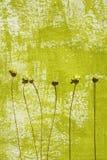 Geschilderde achtergrond en droge bloemen Stock Fotografie