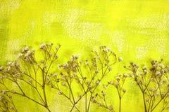 Geschilderde achtergrond en droge bloemen Royalty-vrije Stock Foto