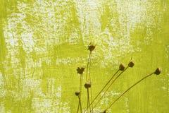 Geschilderde achtergrond en droge bloemen Royalty-vrije Stock Foto's