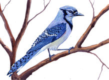 Geschilderde blauwe vogel Royalty-vrije Stock Fotografie