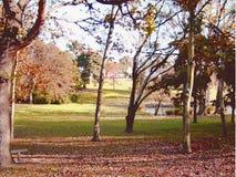 Geschilderde Bomen Royalty-vrije Stock Foto