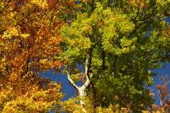 Geschilderde bomen in de herfst stock fotografie