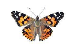 Geschilderde die damevlinder, op wit wordt geïsoleerd Stock Foto's