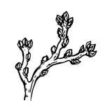 geschilderde die tak van een boom met een nier op een witte achtergrond wordt geïsoleerd Royalty-vrije Stock Fotografie