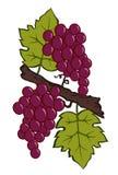 Geschilderde druiven en bladeren Stock Fotografie