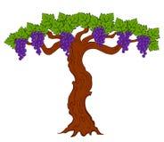 Geschilderde druiven en bladeren Royalty-vrije Stock Foto