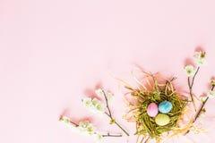 Geschilderde eieren in nest en bloementakken die op roze document achtergrond liggen Eieren, koekoeksbloem en gestreepte doek Vla stock afbeelding