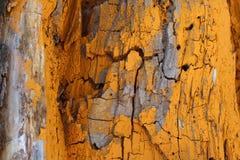 Geschilderde gele houten boom royalty-vrije stock fotografie