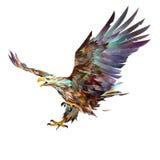 Geschilderde heldere vliegende adelaar op witte achtergrond Stock Foto
