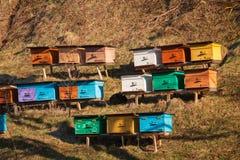 Geschilderde houten bijenkorven Royalty-vrije Stock Foto