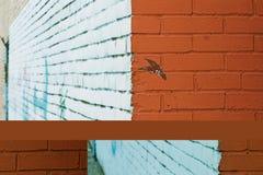 geschilderde muur met graffiti Stock Foto
