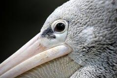 Geschilderde Ooievaar in Kuala Lumpur Bird Park Stock Foto's