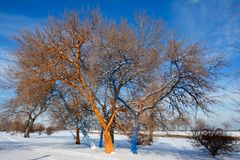 Geschilderde Sneeuwbomen Royalty-vrije Stock Foto