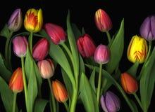 Geschilderde Tulpen Stock Foto's