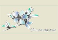Geschilderde vectorbloemen in zachte lichtblauwe kleuren De bloemenwaterverf van de de lentecontour vector illustratie