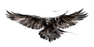 Geschilderde vliegende vogel op witte achtergrond Royalty-vrije Stock Foto