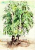 Geschilderde waterverfkaart met bomen Royalty-vrije Stock Foto's