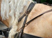 Geschirre für Pferde Stockbild