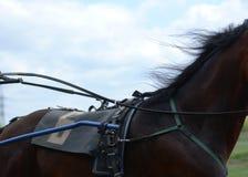 Geschirrpferderennen ausführlich Teil von Pferdehufzucht Stockfotografie