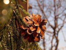 Geschitterde Pinecone op Pijnboomslinger Royalty-vrije Stock Foto