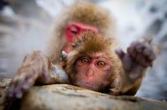 Affe-heiße Quelle Lizenzfreies Stockfoto