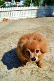 Geschlossen herauf Gesicht des Hundes lizenzfreies stockfoto