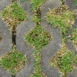 Geschlossen herauf Gras im Blockwegweg Stockbilder