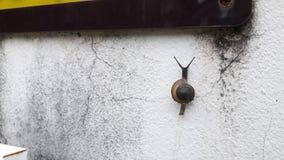 Geschlossen herauf Schneckenweg auf Wand lizenzfreies stockfoto
