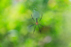 Geschlossen herauf wilde Spinne Lizenzfreie Stockfotos