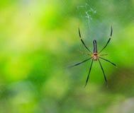 Geschlossen herauf wilde Spinne Lizenzfreie Stockfotografie